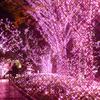 """今年はハートの装飾を加えた、ピンクの光が""""まち""""を彩る!「新宿テラスシティ イルミネーション '17-'18」開催"""