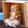 キスマイ北山宏光が映画初出演&初出演で猫役に挑戦⁉ シュールであたたかな愛の物語『トラさん』2019年実写映画化!