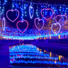 星空のようなイルミネーションが運河に輝く♡ ハウステンボスにて『七夕まつり』初開催!『ボスコスコレクション』や『ペット入場無料キャンペーン』も