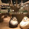 ちくちくハリネズミに、もふもふミーアキャット&フェレットも♡ 原宿で人気のハリネズミカフェ「HARRY」が横浜にオープン!!