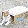 """猫好き必見!!♡ あなたの愛猫が『トラさん~僕が猫になったワケ~』本編最後に登場!""""うちの「トラさん」写真投稿キャンペーン""""開催中~!"""