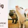 日本初のマイクロブタとふれあえる『mipig café(マイピッグ カフェ)』が3月1日(金)、東京・目黒にオープン♪