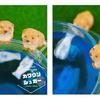 お魚をじっと眺めるカワウソたちに悶絶必至☆ 可愛すぎて溶かせない『カワウソシュガー』ヴィレヴァンオンラインに登場!