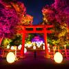 カラフルな球体や木々が変化し続ける光のアート空間♪ チームラボ『下鴨神社 糺の森の光の祭 Art by teamLab - TOKIO インカラミ』今年も開催