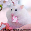 フェレット&デグーが新登場♪ ハリネズミやリス、ハムスターなど癒しの小動物たちが大集合した『まるっと小動物展 2020』東京&名古屋にて開催!