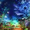 「カレイド花火」に「シャボン玉ライトアップ」も♪『二条城×ネイキッド 夏季特別ライトアップ2020』開催!!