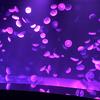 新エリア「海月空感(くらげくうかん)」がピンクに染まる♪ 夜のサンシャイン水族館『もっと♡性いっぱい展』開催中!<レポ>
