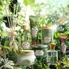 心洗われるような、清らかな抹茶の香り♡ SABONから、自然への賛美をテーマにした『ブリスフル・グリーン リミテッドコレクション』が数量限定で登場!